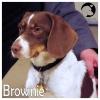 Brownie *