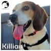 Killian *