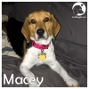 Macey *