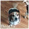 Beatrix *