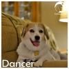 Dancer *