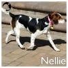 Nellie *