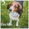 Elsa Mae *