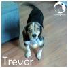 Trevor *