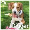 Digger *