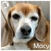 Macy *