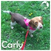 Carly *