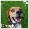 Dandy *