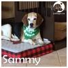 Sammy *