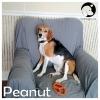 Peanut *
