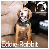 eddie rabbit aarb