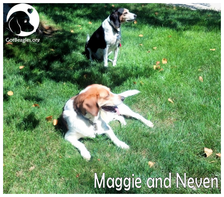 maggie and neven