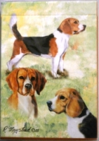 beagle-playing-cards