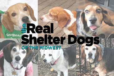 unleashed-real-shelterdogs-midwest-promote